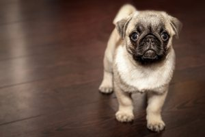 how to stop a dog from pooping in the house