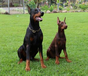 dog training commands in different languages