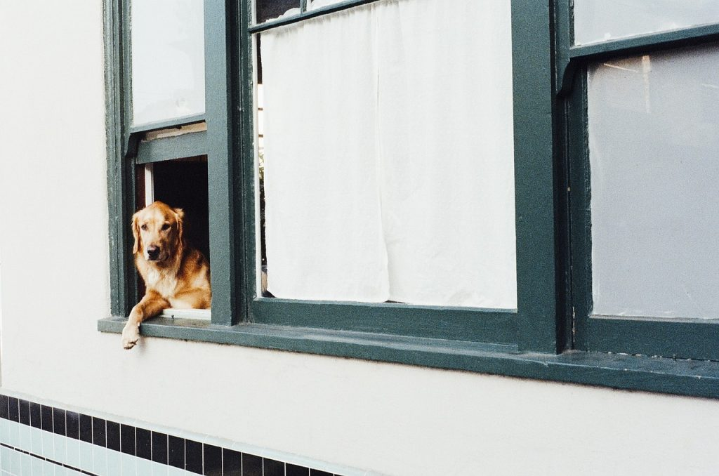 dog barks at everything out the window