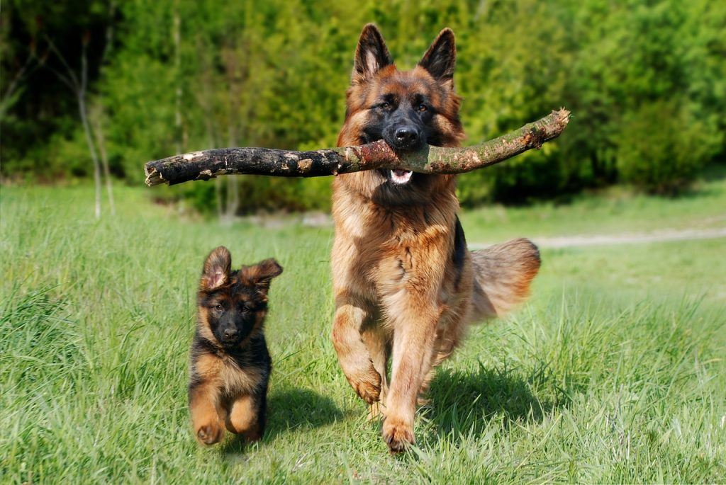 how old is too late to train a dog
