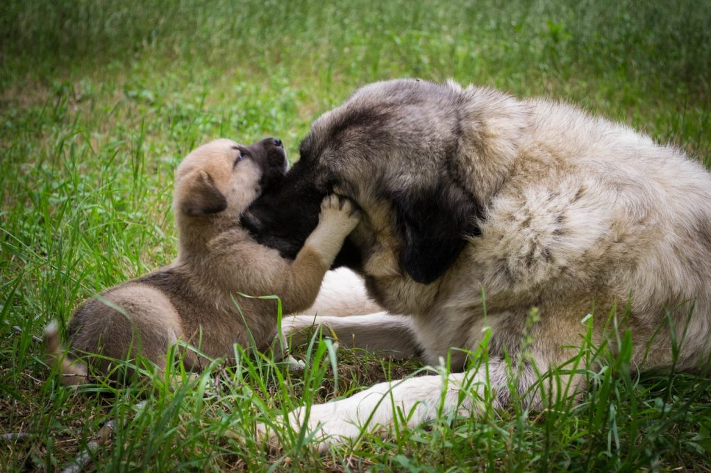 how long should a puppy stay with its mother