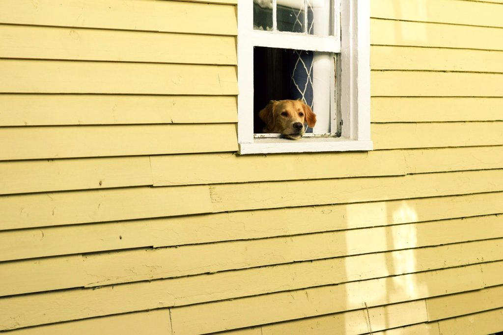 dog pooping in house on purpose
