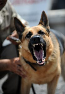 how to train a dog to attack on command