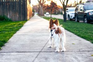 what does heel mean for a dog