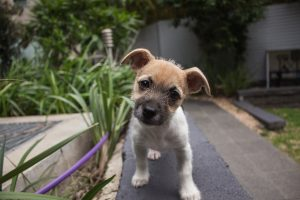 how to train puppy to hold bladder