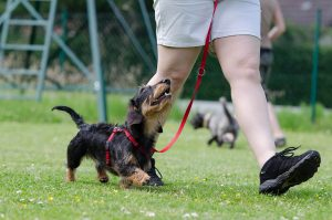 how much does dog training cost