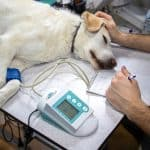 how much does heartworm treatment cost